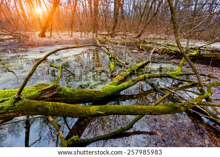old tree on bog in deep forest - stock photo