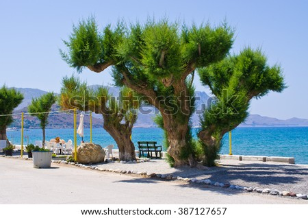 Old tree on the coast - stock photo
