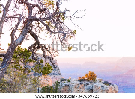 Old tree on the rim road of grand canyon, - stock photo