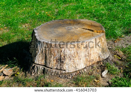 old tree stump in the summer park - stock photo
