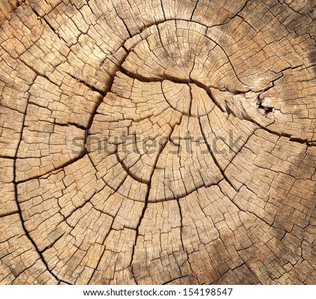 old tree stump texture background - stock photo