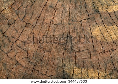 old tree stump texture background - stock photo