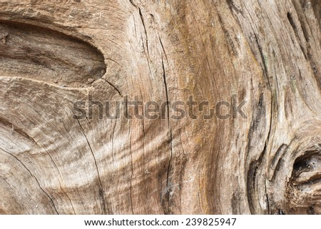 old tree texture background - stock photo