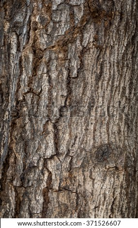 Old tree texture background. - stock photo