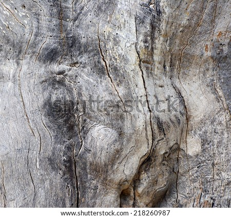 old tree trunk background - stock photo