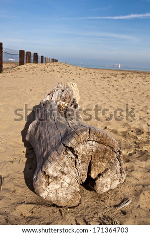 Old tree trunk in San Francisco at the beach in the winter - stock photo