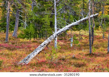 Old tree trunk in the primary forest - stock photo