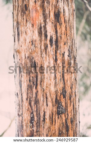 old tree trunk with green moss and bark in winter on snowy background - vintage retro effect - stock photo