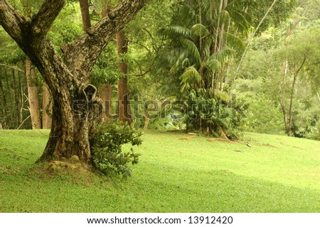 Old Trees - stock photo