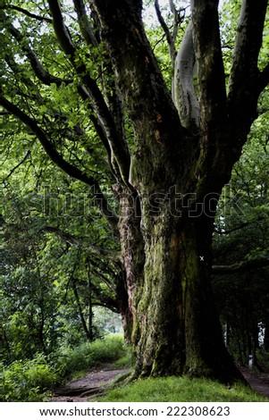 old trees - stock photo