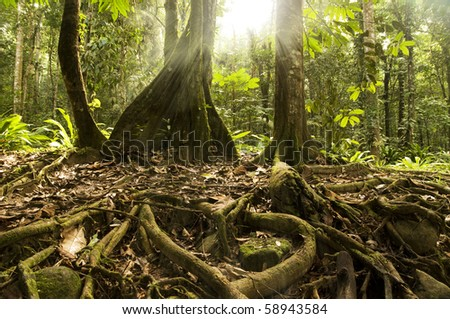 Old tropical forest with ray of sunlight - stock photo