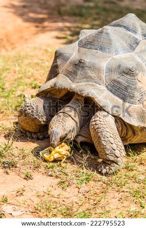 Old  turtles in garden - stock photo