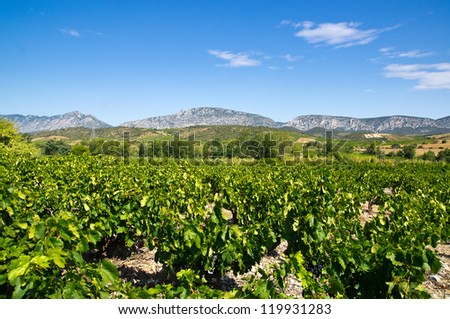 Old vineyard at Maury, landscape with Queribus castle - stock photo