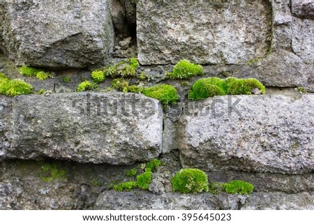 Old wall covered with moss  - stock photo