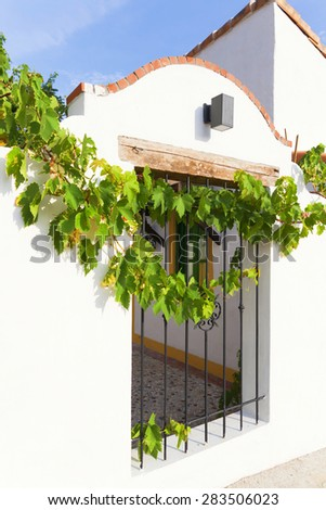 old wall with vine tree - stock photo