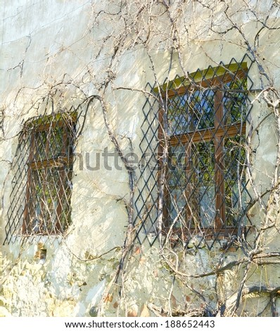 Old wall with windows covered by plants - stock photo