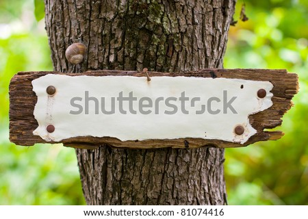 Old weather-beaten sign in the woods. - stock photo