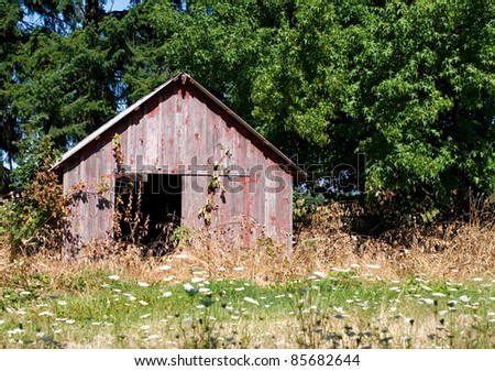 Old weathered red shed standing in a field of weeds, blackberry briars and wild yarrow against green trees. - stock photo
