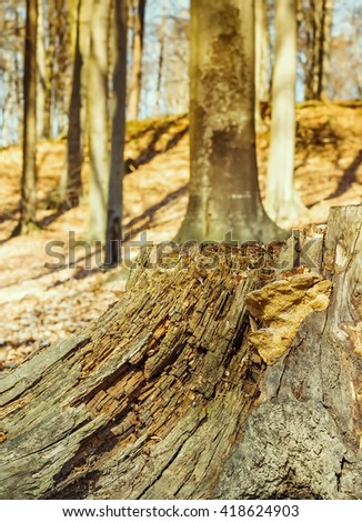 Old weathered tree stump - stock photo
