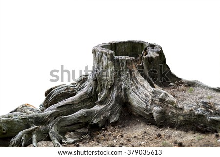 Old weathered tree stump with root isolated on white - stock photo