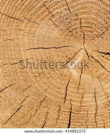 Old weathered wood texture, cross section of cut log with concentric annual growth rings.  - stock photo