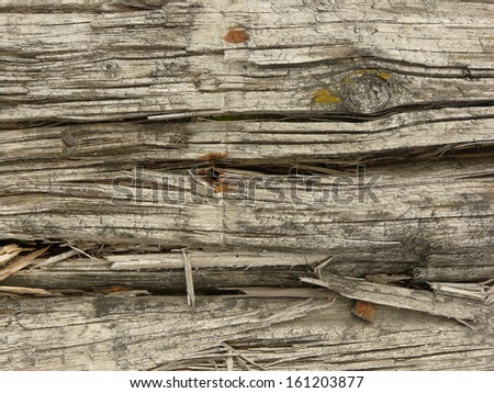 Old white wood texture with heavy cracks and splintered areas and several rusted nail heads. - stock photo