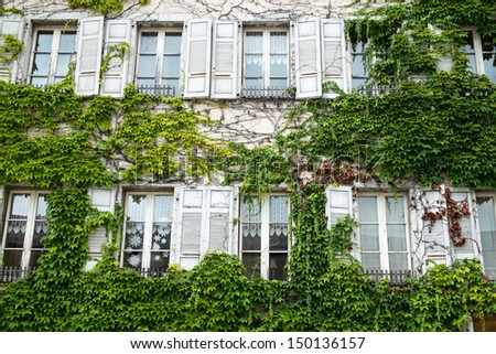 old Window with tree - stock photo