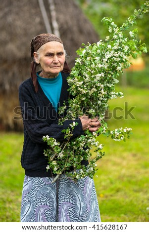 Old woman outdoor with a shrub of hawthorn flowers to make infusion - stock photo