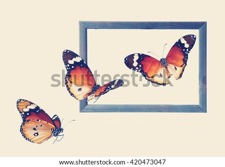 Old wood photo frame and butterflies. ( Butterflies of Danaus chrysippus (Plain tiger or African monarch). Wildlife art composition. Toned colors vintage image  - stock photo
