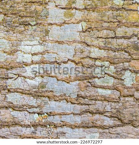 Old Wood(rind,bark) Tree Texture Background Pattern,Tree bark texture - stock photo