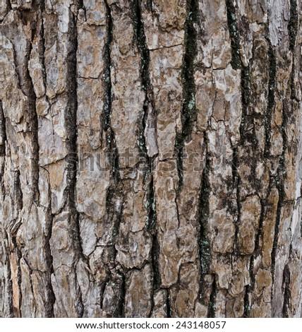 Old wood texture of tree bark. - stock photo