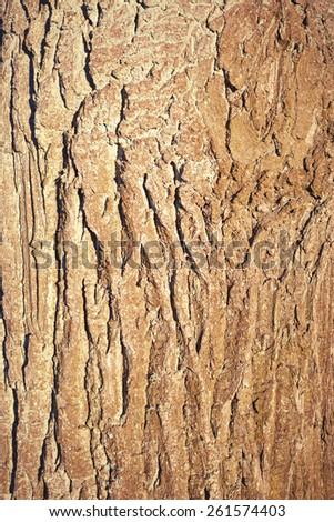 Old wood tree bark texture - stock photo