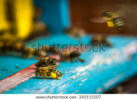 Old wooden bee hive in the countryside. - stock photo