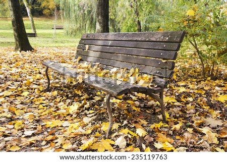 Old wooden Bench in the park in autumn season  - stock photo