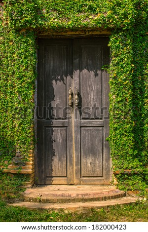 Old wooden door in the wall covered with green ivy - stock photo