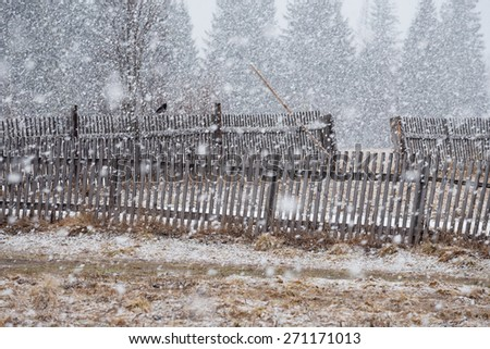 Old wooden fence in a field and a lone crow sitting on it.  - stock photo
