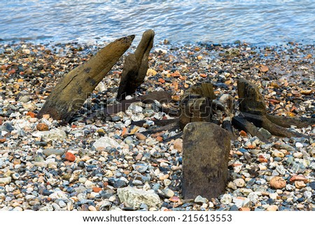 Old wooden logs seen on Thames beach during a low tide, London, UK - stock photo