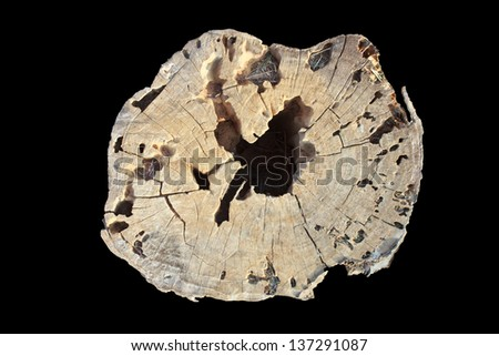 Old wooden stump isolated on the white background - stock photo