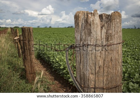 Old worn wooden fence, soy plantation in the background - stock photo