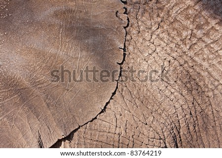 old wrinkled and weathered elephant hide - skin - stock photo