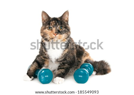 Older cat with two dumbbells of 1 kg, isolated on a white background - stock photo