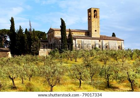 Olive Grove in Tuscany, Italy, Europe - stock photo