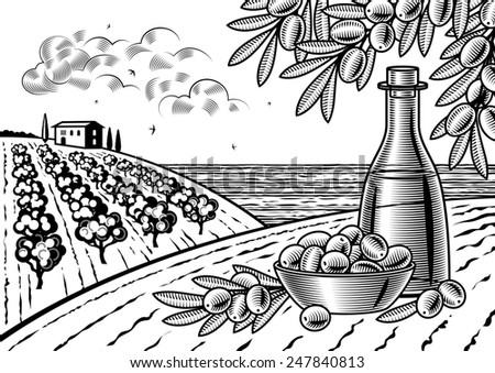 Olive harvest landscape black and white - stock photo