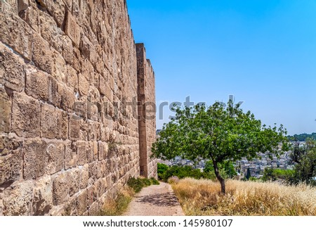 Olive tree near the wall surrounding the Old City of Jerusalem - stock photo