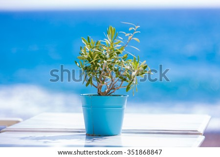 olive tree on a table outdoor cafe - stock photo