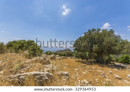 Olive tree overlooking Nimrod Fortress Ruins and galilee  - stock photo