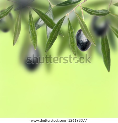 Olive tree with yellow background - stock photo