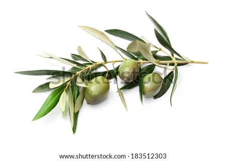 Olives on branch with leaves isolated on white. - stock photo