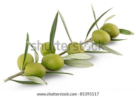 olives on the white background - stock photo