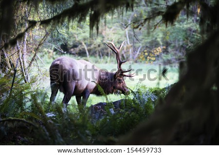 Olympic Rainforest national Park - stock photo